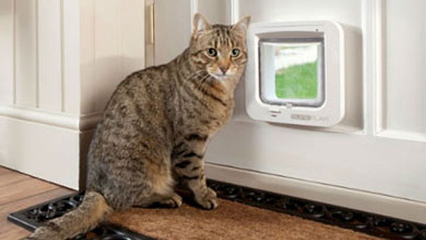 Who S At The Door Choosing The Right Cat Flap