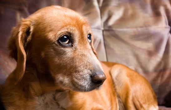 Submissive Urination Explaining This Behaviour In Dogs