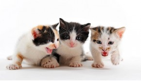 Kittens-common-issues-and-emergencies