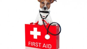 What-to-include-in-your-Pet-First-Aid-Kit---No-Vet-Substitute