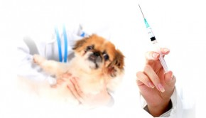 Your-Dogs-Vaccinations-and-What-You-Should-Know