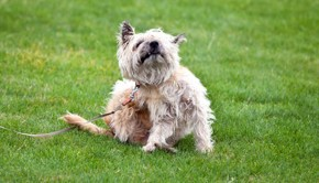 Causes-of-Itching-in-Dogs