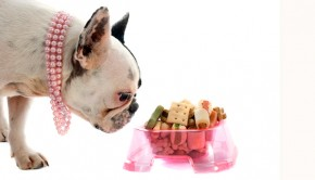 Mixing-your-pets-food