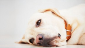 Coping with Canine Anxiety and Fear