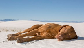 Preventing Dehydration in Dogs