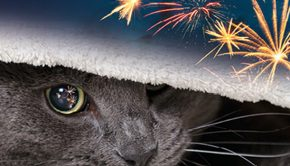 cats-and-fireworks