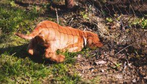 Dog Behaviour - Dog Digging