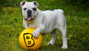 A-Z of keeping Pets Healthy