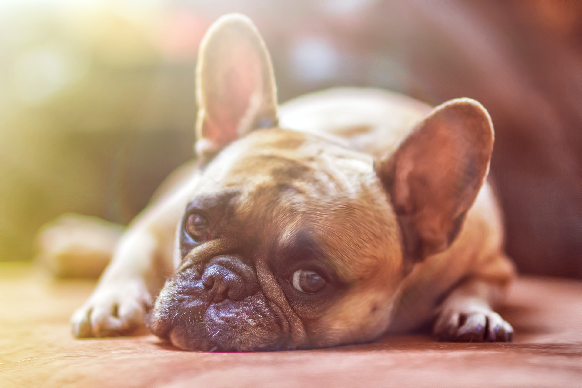 All About Intestinal Worms in Dogs - Find Out More