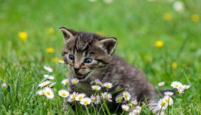 kitty-2948404_1920